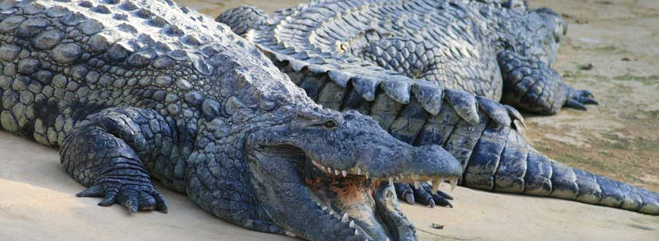 Ferme aux crocodiles Ardèche