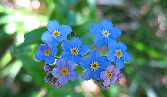 Fleur d'Ardèche